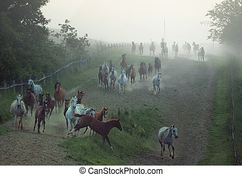 Bevy of horses running at the rular area - Bevy of strong...