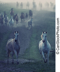 Wild horses running through the rular path - Bevy of wild...