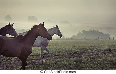 Great scene of running horses - Great scene of running wild...