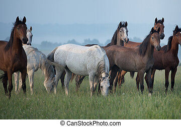 Bevy of horses on the meadow - Bevy of wild horses on the...