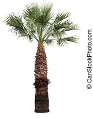 palm-tree, 被隔离