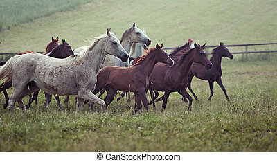 Picture of bevy wild horses on the meadow - Photo of bevy...