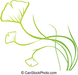 Ginkgo Biloba - Abstract Ginkgo Biloba Floral Over White,...