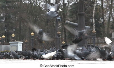 flock of pigeons on the square