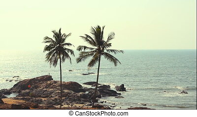 India Goa Vagator beach February 20, 2013. Palm Trees...