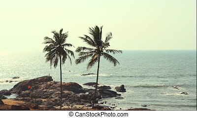 India Goa Vagator beach February 20, 2013 Palm Trees...