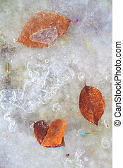 frozen leaf - A photography of a frozen red leaf