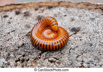 Millipedes are similar to centipedes, but have two pairs of...