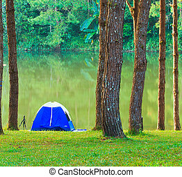 Camping in the forest pine