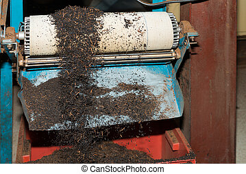 Black tea bulk on production line at tea factory after...