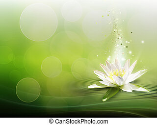 water lily - natural background with a water lily