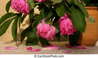 Wilting peonies in a jar - Wilting peony flowers in a...