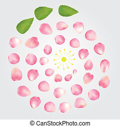 rose petals composition - vector illustration of flower...