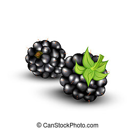 vector blackberries - vector blackberries on a white...