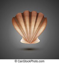 vector  sea shell