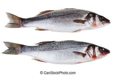 two raw sea bass fish isolated on white background