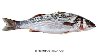 seabass - one raw see bass fish isolated on white background