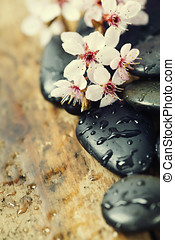 Zen pebbles with spring tree - Stone spa , branch blossoming...