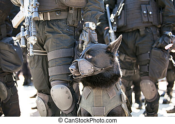 police dog - A policeman with police dog