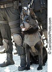 police dog - A policeman with police dog