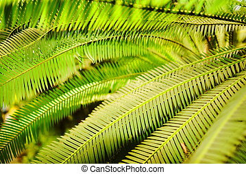 Leaves of the palm - Closeup of the green, long leaves of...