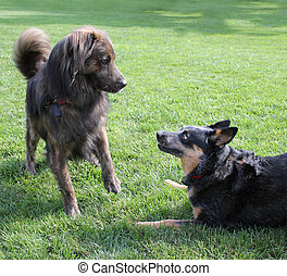 Two dogs playing - Two large dogs playing in a grassy area