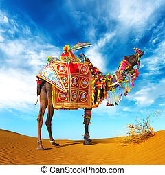 Camel in desert Camel fair festival in India, Rajasthan,...