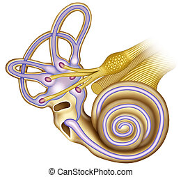 General extructura hearing of the cochlea - Schematic...