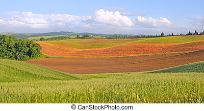 crete senesi, tuscany - spring fields in the crete senesi,...