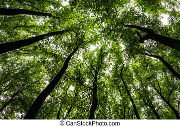 Looking up at tall trees in a forest in Shenandoah National...