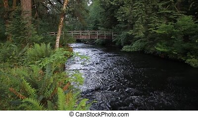 Creek in Silver Falls State Park OR - Water Flowing in Creek...