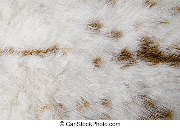 rabbit skin - white rabbit skin with whit spots