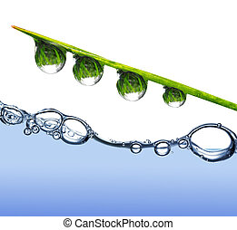 Fresh grass with dew drops above the water level
