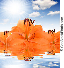 floral background with orange lily mirrored in the water