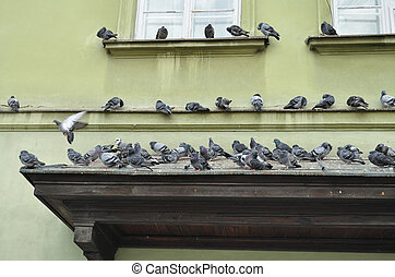 Pigeons in Warsaw Old Town - Pigeons on the historic...