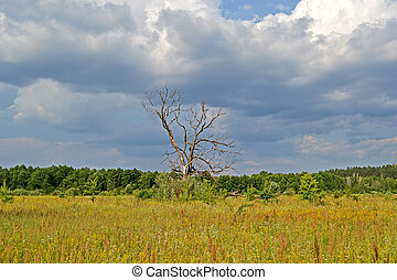 vintage tree in the meadow before thunderstorm, blue sky with white clouds, travel details