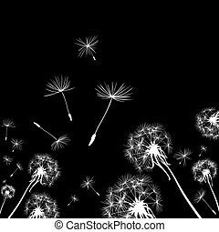 dandelions  - silhouettes of dandelions in the wind