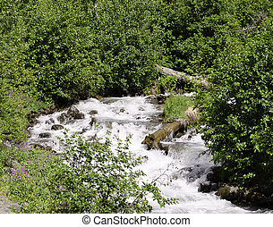 Babbling brook - A view of a rushing stream in Alaska