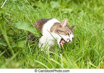 enojado, pasto o césped, verde, gato