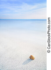 Sea Mollusk Shell in a white tropical beach under blue sky -...