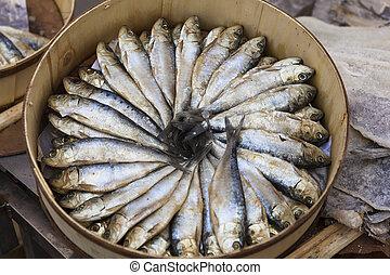 Sardinen geordnet - Fisch,KReis,Lebensmittel,Fang