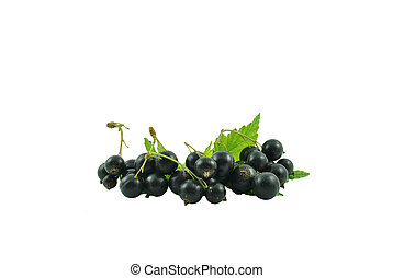 blackcurrant - black currant on a white background