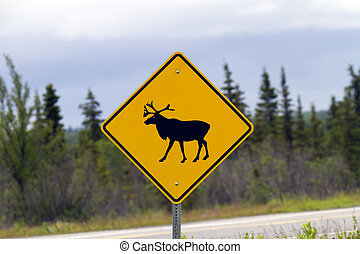 watch out for moose