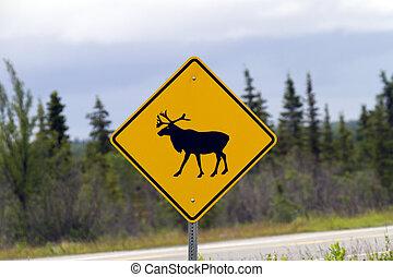 ur, ute, Moose