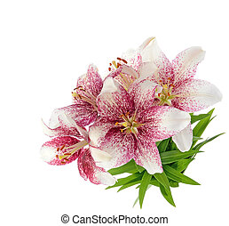 Tiger lillies isolated on white - Bouquet of tiger lillies...