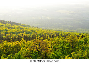 Spring landscape with fresh green forest
