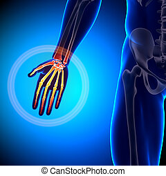 Hand / Carpals / Metacarpals / Phalanges - Anatomy Bones