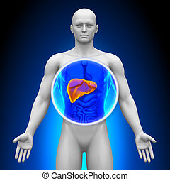 Medical X-Ray Scan - Liver