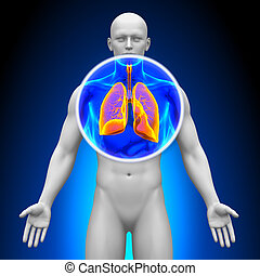 Medical X-Ray Scan - Lungs