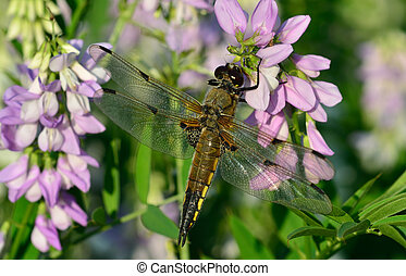 Dragonfly in sun on flower